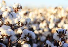 Cotton Yarn Market To Pick Up